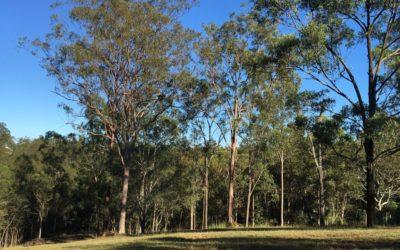 Acreage Home Builders in Brisbane